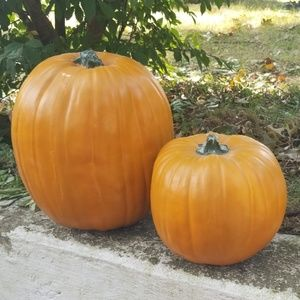 Harvest Pumpkin Decor
